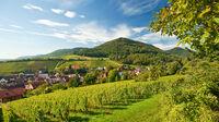 © Rheinland-Pfalz Tourismus GmbH / Dominik Ketz / Leinsweiler, Rheinland-Pfalz - Weinanbau
