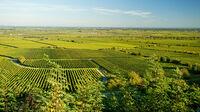 © Rheinland-Pfalz Tourismus / Dominik Ketz / Deidesheim, Rheinland-Pfalz - Weinanbau / Zum Vergrößern auf das Bild klicken