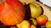 © hall-wattens.at / Hall-Wattens, Tirol - Äpfel-Kürbis Bauernmarkt / Zum Vergrößern auf das Bild klicken