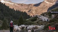 © Archiv Tourismusverband Tux-Finkenberg / Maren Kings / Tux-Finkenberg, Tirol - Almabtrieb / Zum Vergrößern auf das Bild klicken