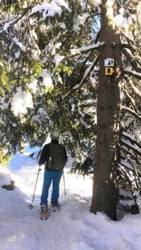 Bayerischer Wald, DE -  Schneeschuhwandern am Siebensteinkopf