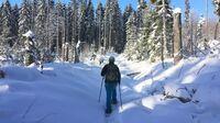 Bayerischer Wald, Bayern -  Schneeschuhwandern am Siebensteinkopf