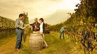© Carlo Baroi / Trentino, Italien - Weinlesefest / Zum Vergrößern auf das Bild klicken