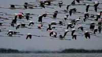 © Archivio Po Delta Tourism bis / Comacchio, Italien - Flamingos / Zum Vergrößern auf das Bild klicken