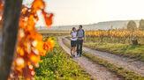 © Burgenland Tourismus / Thomas Schmid / Burgenland - Genusswandern / Zum Vergrößern auf das Bild klicken
