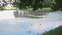 © Edith Köchl, Wien / Schloss Njaswisch, Belarus - See / Zum Vergrößern auf das Bild klicken