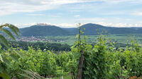 © Edith Spitzer, Wien / Kremstal-Donau, NÖ - Donautal / Zum Vergrößern auf das Bild klicken