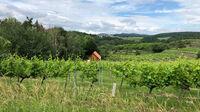 © Edith Spitzer, Wien / Kremstal-Donau, NÖ - Weinanbau / Zum Vergrößern auf das Bild klicken