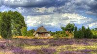 © pixabay.com / krottorfer / Lüneburger Heide, DE - Hütte / Zum Vergrößern auf das Bild klicken