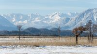 Murnauer Moos, Bayern -  Winter