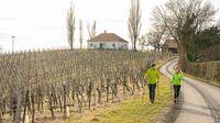Bad Radkersburg, Steiermark - Weingärten von Klöch und Tieschen