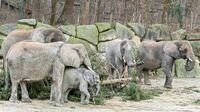 Tiergarten Schönbrunn, Wien - Christbaum im Elefanten-Gehege 2021
