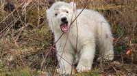© Daniel Zupanc / Tiergarten Schönbrunn, Wien - Eisbären-Baby4 / Zum Vergrößern auf das Bild klicken
