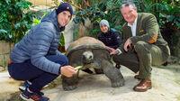 © Daniel Zupanc / Tiergarten Schönbrunn, Wien - Dominic Thiem mit Riesenschildkröte / Zum Vergrößern auf das Bild klicken