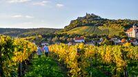 Falkenstein, NÖ - Weinherbst