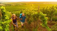 © Dominik Ketz / Rheinhessen, DE - Weinwanderwege / Zum Vergrößern auf das Bild klicken