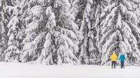 Mühlviertel, OÖ - Schneeschuhwandern