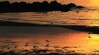 © Setouchi Tourism Authority / Setouchi, Japan - Seto-Sea / Zum Vergrößern auf das Bild klicken