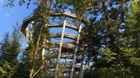 © Edith Spitzer, Wien / Sommerberg, Bad Wildbad - Aussichtsturm Baumwipfelpfad / Zum Vergrößern auf das Bild klicken