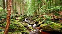 © Marco Felgenhauer, Woidlife Photography / Bayerischer Wald, DE - Steinklamm in Spiegelau