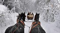 © TTG / Foto: Andreas Weise / Thüringer Wald, DE - Pferdeschlitten / Zum Vergrößern auf das Bild klicken