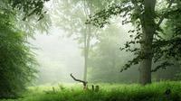 © slovakia.travel / UNESCO-Welterbe Buchenurwälder Karpaten_detail / Zum Vergrößern auf das Bild klicken