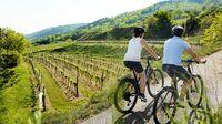 Traisental, NÖ - Radfahren im Weinland
