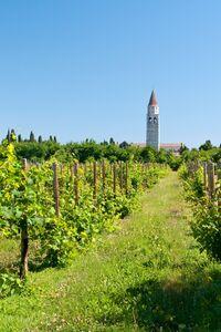 Weingarten mit Blick auf Aquileia, Italien
