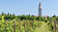 Italien - Weingarten mit Blick auf Aquileia