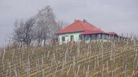 © Edith Spitzer, Wien / Slovenske Konjice, Slowenien - Weingut Gric_Restaurant / Zum Vergrößern auf das Bild klicken