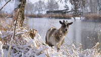 © CorporateArt / Prignitz, Brandenburg - Winter / Zum Vergrößern auf das Bild klicken
