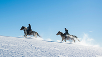 © Oberösterreich Tourismus / David Ludmayr / Mühlviertel, OÖ - Winterreiten / Zum Vergrößern auf das Bild klicken