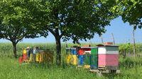 © Edith Spitzer, Wien / Wolfpassing, NÖ - Parbus_Bienen / Zum Vergrößern auf das Bild klicken