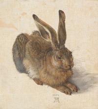 © Albertina, Wien / Albertina, Wien - Ausstellung Albrecht Dürer_Feldhase / Zum Vergrößern auf das Bild klicken