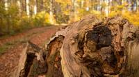 © Raimo Rumpler / Herbst, NÖ - Wandern / Zum Vergrößern auf das Bild klicken