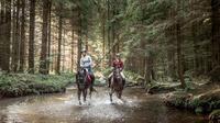 © Pferdereich Mühlviertler Alm / Mühlviertler Alm, OÖ - Reiten / Zum Vergrößern auf das Bild klicken
