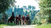 © Pferdereich Mühlviertler Alm / Mühlviertler Alm, OÖ - Pferde am Zügel / Zum Vergrößern auf das Bild klicken