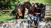 © Pferdereich Mühlviertler Alm / Mühlviertler Alm, OÖ - Rast / Zum Vergrößern auf das Bild klicken