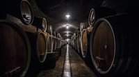 © Bojan Haron Markicevic / Ilok, Kroatien - Weinkeller / Zum Vergrößern auf das Bild klicken