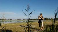 © Steve Haider / Sommer Neusiedler See, Burgenland / Zum Vergrößern auf das Bild klicken