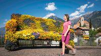 Schenna, Südtirol - Frühling