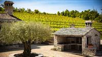 © Ivo Biocina / Istrien, Kroatien - Weingarten / Zum Vergrößern auf das Bild klicken